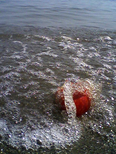 ساحل زیبای رودسر
